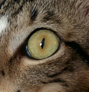 mowgli eye