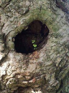 tree hope